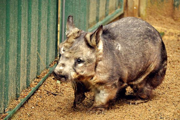 Alma Park Zoo Brisbane (Part 1)
