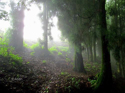 trees nature greenery darjeeling