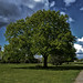 Small photo of Arbre