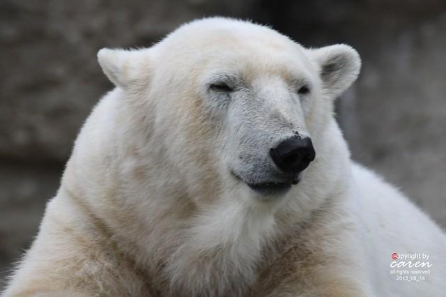 Eisbär Giovanna 2013_08_14 307