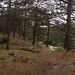 De witte paaltjes route in Schoorl bewandeld. 17 kilometers, afwisselend in bos, heide, strand en heide...