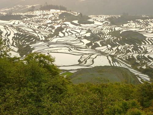 Yunnan13-Yuanyang 1-Duoyishu (78)