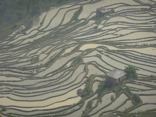 Yunnan13-Yuanyang 24-Bada (71)