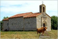 Ermita de La Corrada y vacas