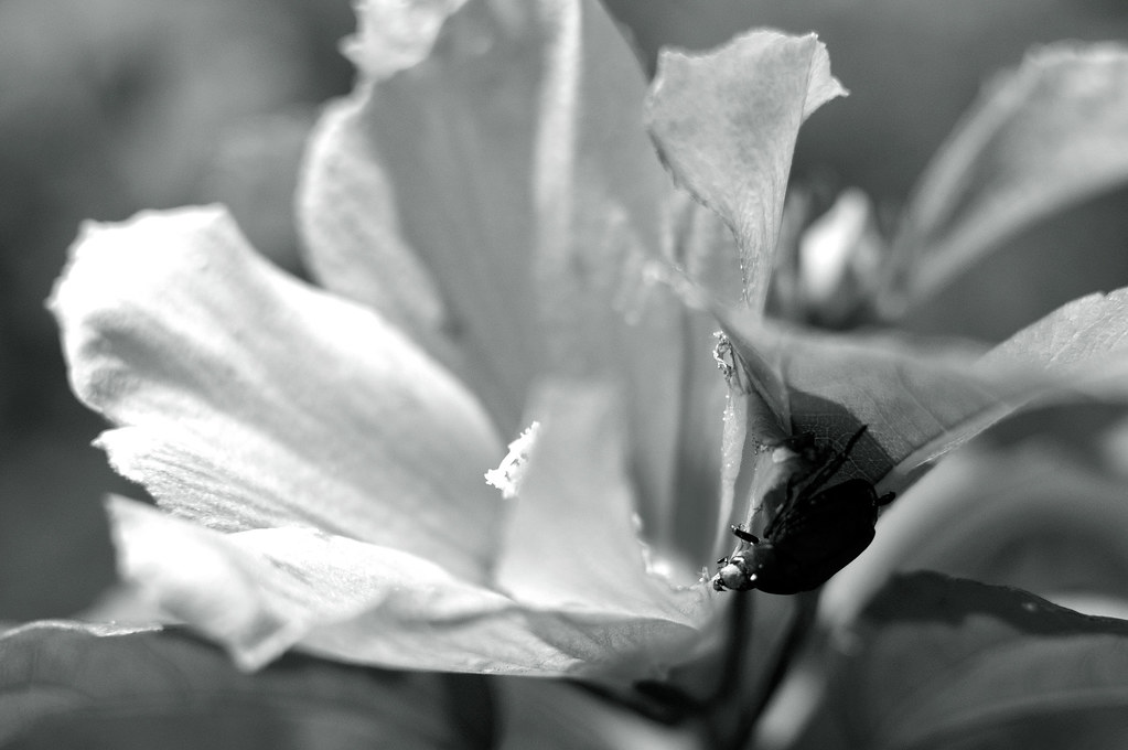 a flower and an insect