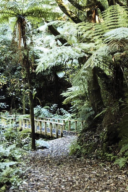 Treetops Lodge