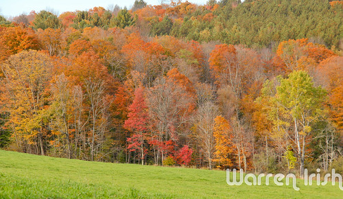 new england color fall leaves october vermont foliage