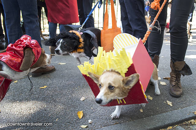 Halloween Dog Costume_McDonalds French Fries_Kenny the Corgi