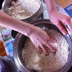 味噌仕込み作業中盤すぎました。塩と米麹を混ぜてます。塩切り麹というらしい。