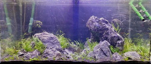 50G - New Aquascape