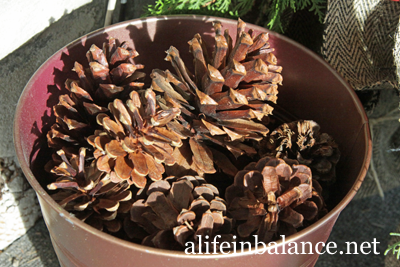 Outdoor Display for Fall/Winter Using Burlap and Evergreens/Shrubs