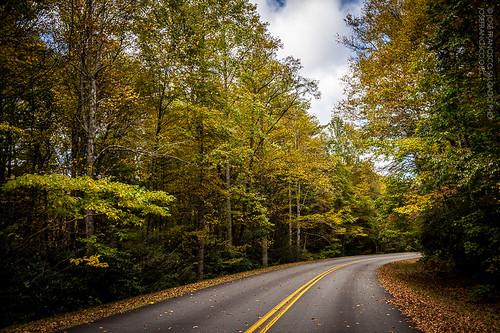 road autumn usa tree fall forest us woods flora nikon carretera unitedstatesofamerica northcarolina bosque árbol otoño nikkor blueridgemountains blueridgeparkway newland pisgahnationalforest d4 2470mmf28g 2013101228872