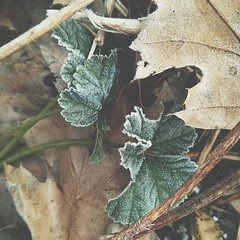 Fall ensemble with a wintery décor