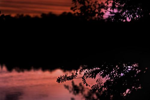 sunset color reflection fall water night leaf dof bokeh pov konicahexanon sonynex