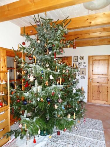 Serbische fichte als weihnachtsbaum