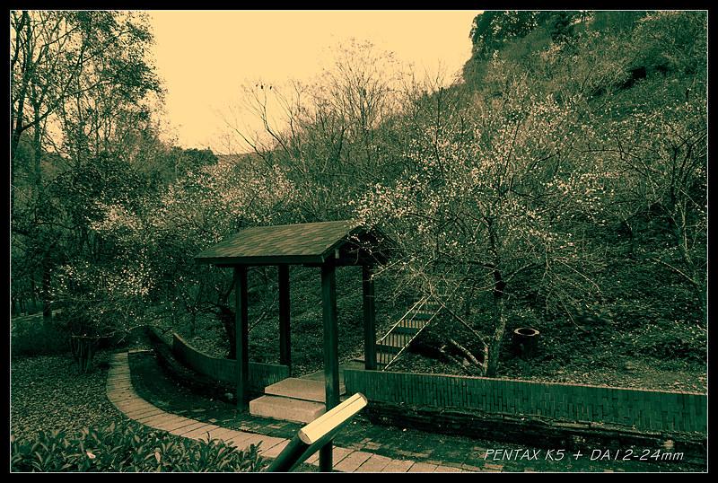 再探石門~~ 楓葉掉了, 梅花開了