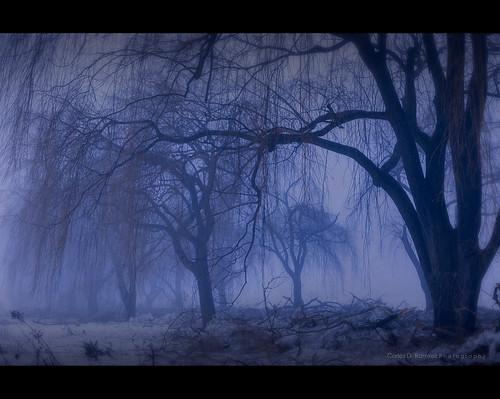 trees winter snow ontario canada cold fog landscape richmondhill carlosdramirez cdr35 cdrphotostudiocom