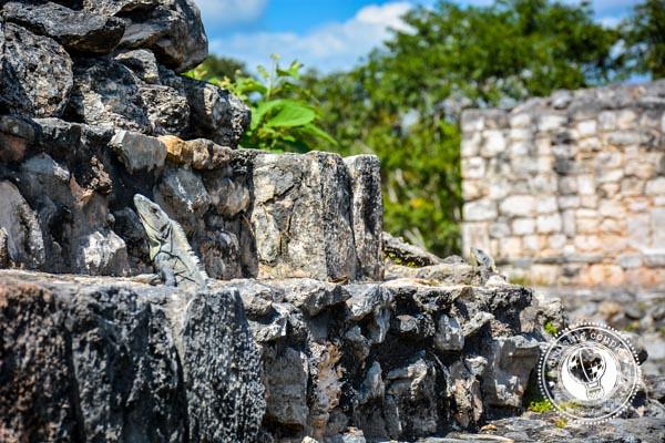 Lizards on Ek Balam Mayan Ruins