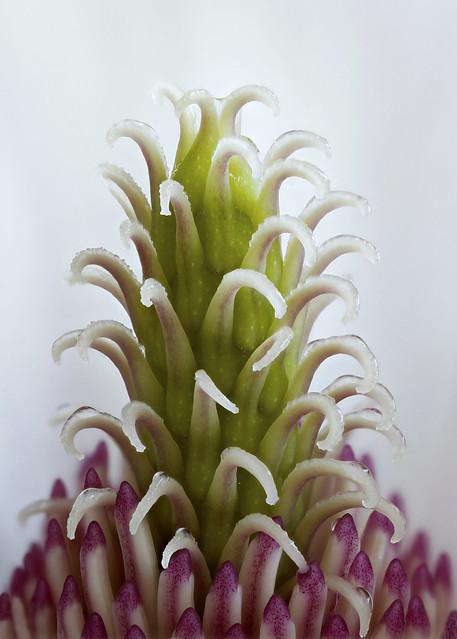 magnoliacentrum