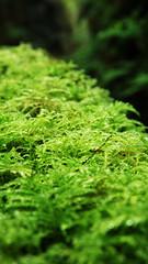 leaf, plant, nature, macro photography, flora, green, vegetation, moss,