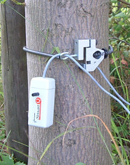 Force sensors around a tree