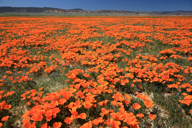 Antelope Valley California Poppy Reserve SNR