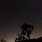 Joshua Tree National Park at night