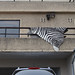 zebra print rug over balcony