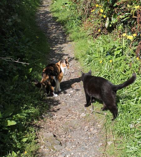 cats keeping company