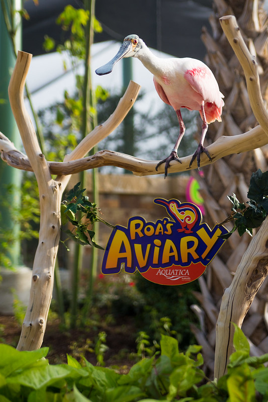 Roa's Aviary-7.jpg