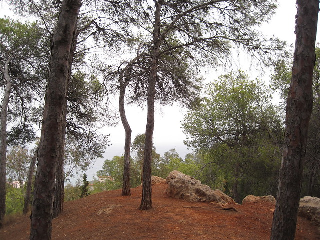 Mi bosque
