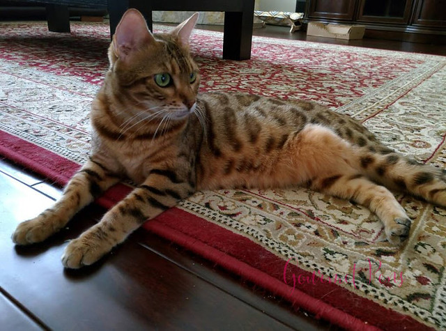 Whiskers & Paws December 2016 Edition (4)