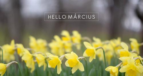 hello_marcius2017