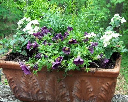 Backyard flower box(es)