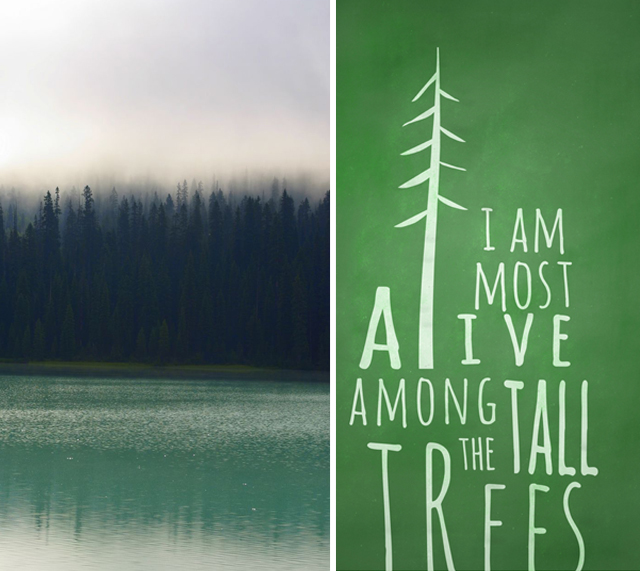 most alive among the tall trees