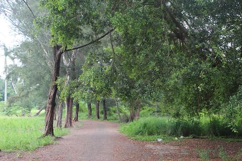 樹木是保育諸羅樹蛙的關鍵。
