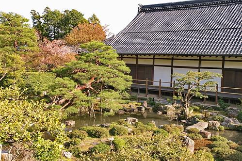 【写真】桜 : 等持院