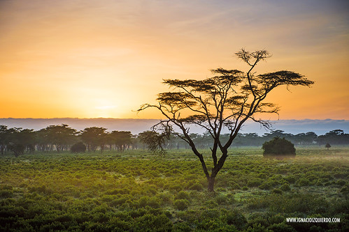 Kenya - Nakuru 21