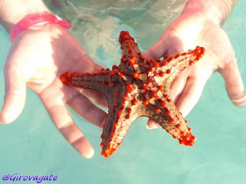 Zanzibar stella marina