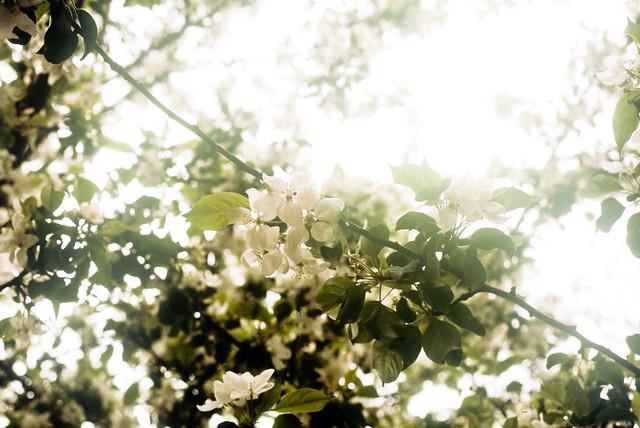 Fleurs surexposées