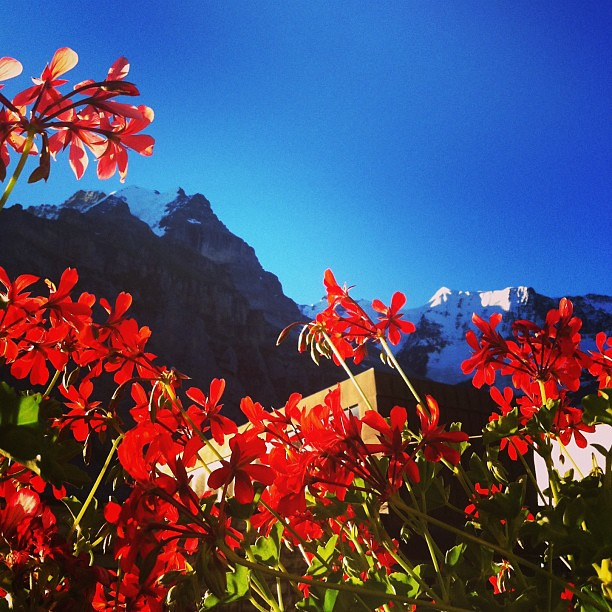 yesterday morning view from hotel in mürren. happy swiss day (1aug)!!!
