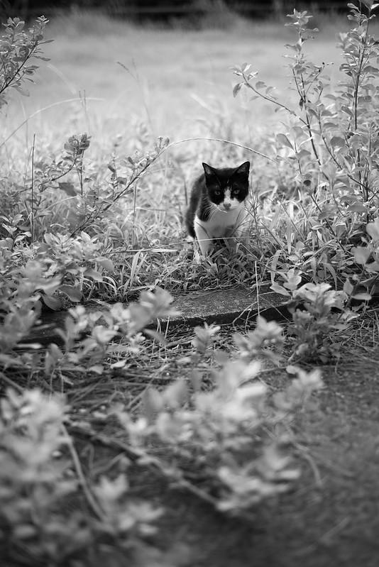 ねこcat in bushes
