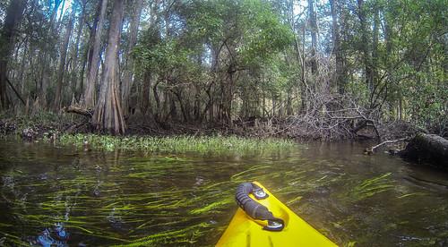 river southcarolina kayaking swamp paddling aikencounty aikenstatepark southedistoriver