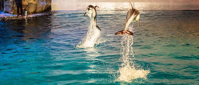 Aquatic Show