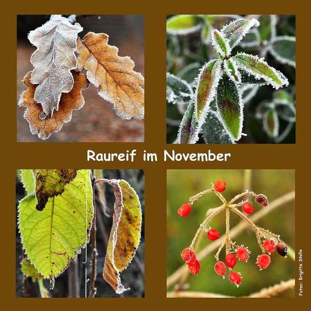Wetter Mannheim November 2013 Raureif Nebel Kälte Herbst Winterwetter Zucker