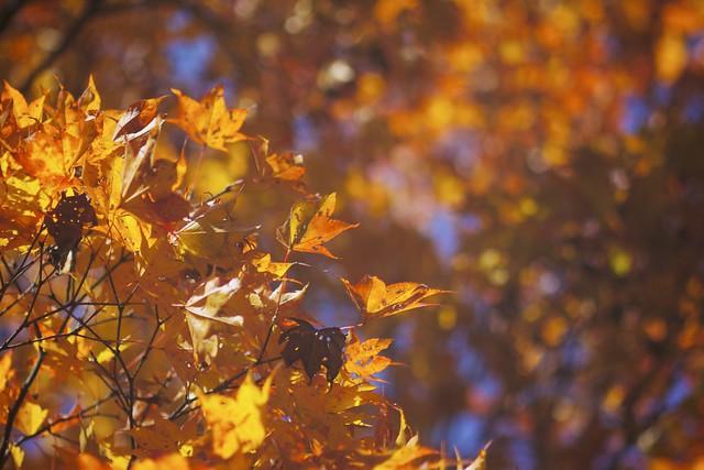 Finishing up Fall