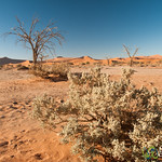 Desert Brush and Trees - Namib Desert, Namibia