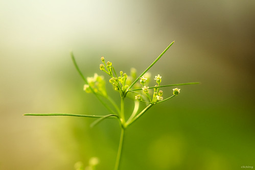 Lovely grassy flowers