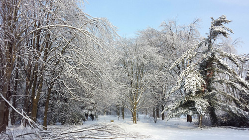 Winter at the Arboretum by @klawrenc