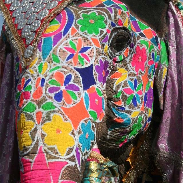 94629602.SlV0XB0p.ElephantFestivalJaipur17